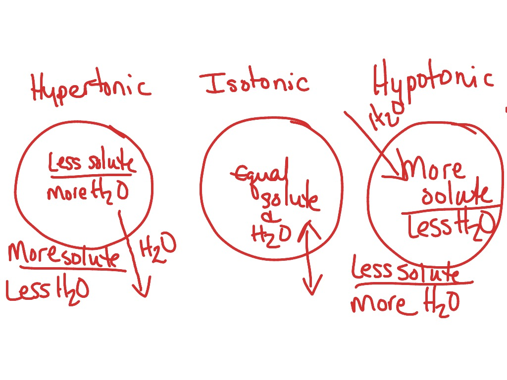 hight resolution of tonicity and animal or red blood cells