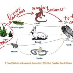Savanna Animal Food Chain Diagram Friedland Doorbell Wiring Grassland Animals Web Topsimages