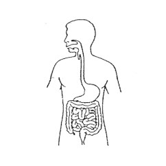 Blank Digestive System Diagram To Label Yamaha Xt 250 Wiring Science Showme