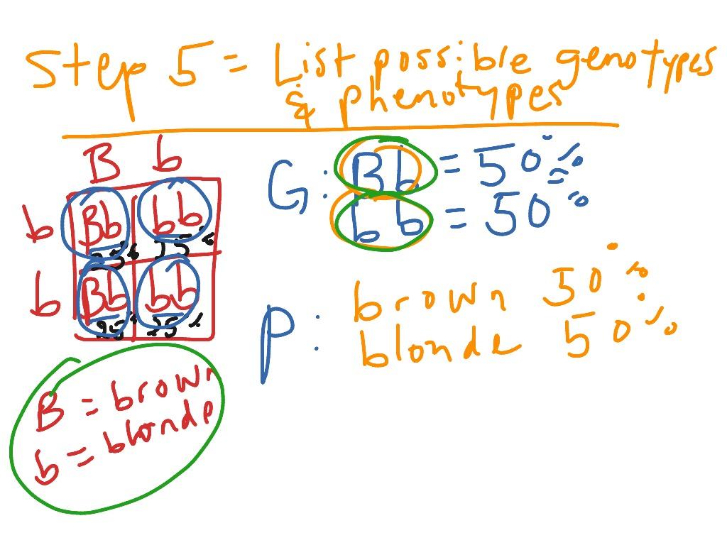5 Steps To Solve A Punnett Square