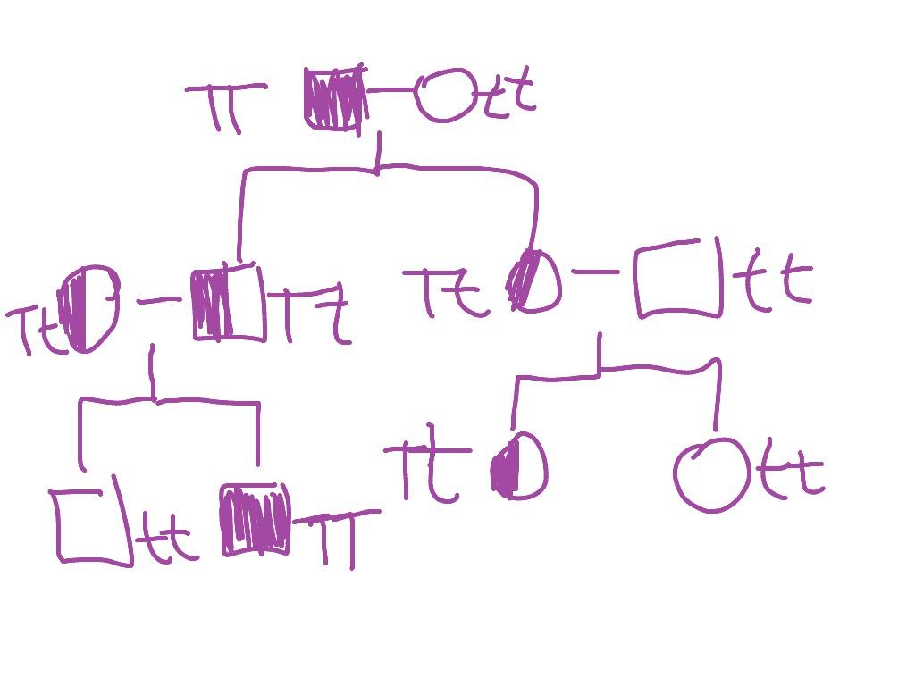 hight resolution of pedigree chart explanation