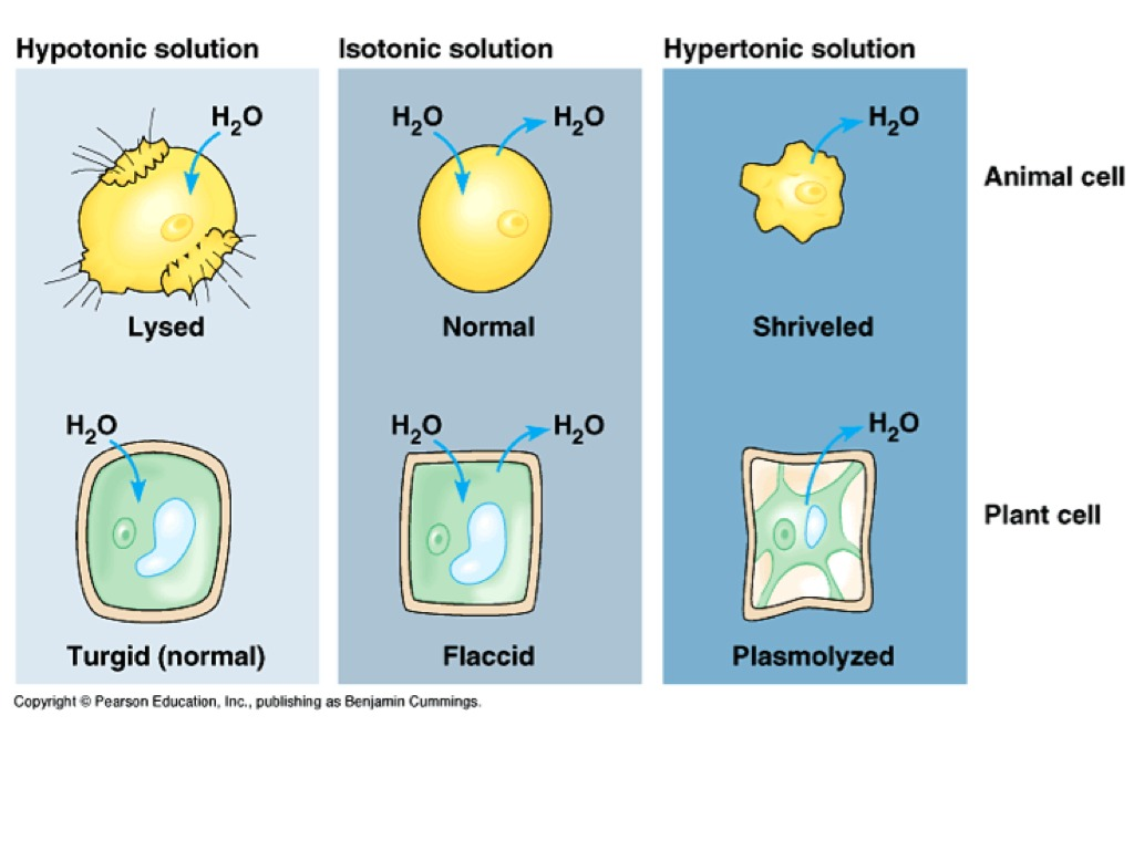 Hypo Iso Hypertonic Solutions