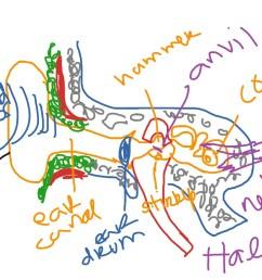 ear diagram project [ 1024 x 768 Pixel ]