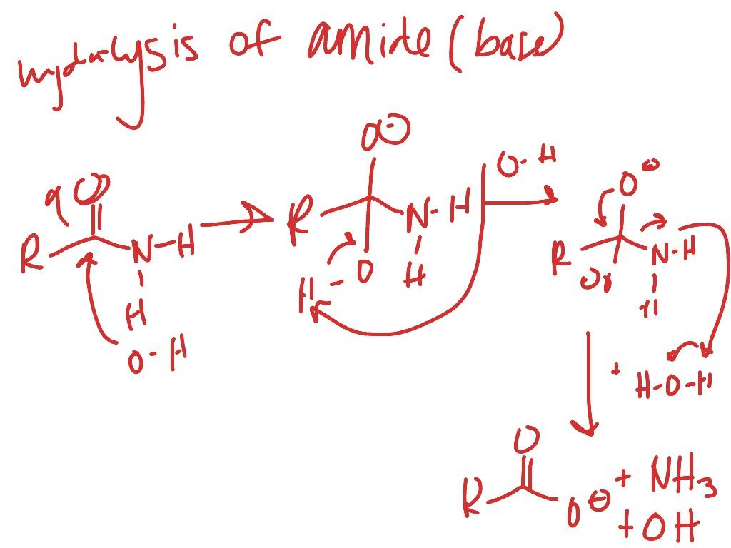 Hydrolysis Of Amide Base