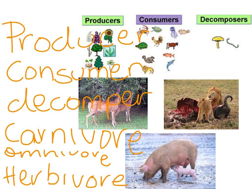 Producer Consumer Decomposer Carnivore Herbivore Omnivore