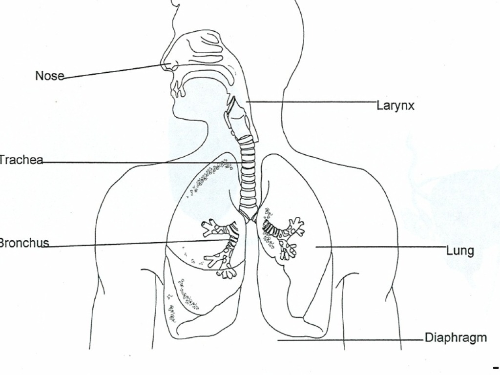 respiratory system blank diagram to label swm 32 multiswitch wiring | science, biology, genetics showme