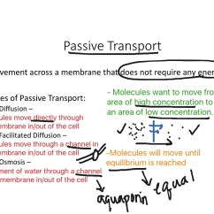 Passive And Active Transport Venn Diagram Boat Fuel Gauge Wiring Showme