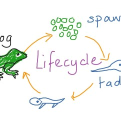 Bird Life Cycle Diagram Autocad Wiring Tutorial Seahorses Of The Great Barrier Reef Science Food Chain