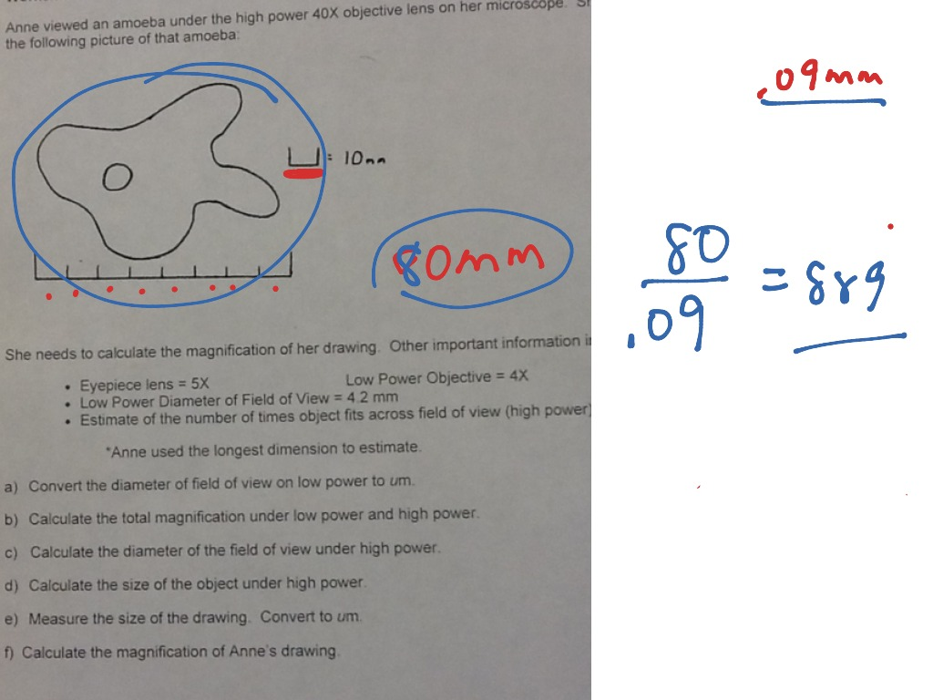 Worksheet 1 Calculations Related To The Microscope