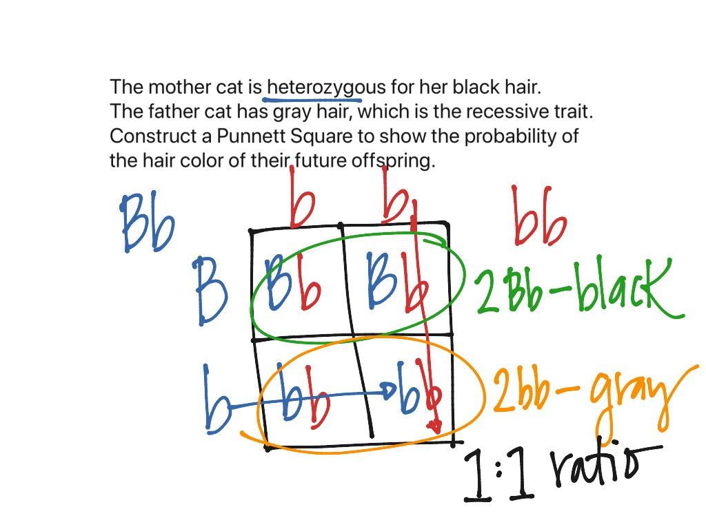 Monohybrid Punnett Square Example