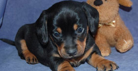 Scout, puppy who died days after being shipped from Missouri to New York