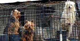 """One of Missouri's """"Dirty Dozen,"""" this puppy mill has a history of problems"""