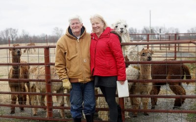 Peaceful Oklahoma alpaca ranch welcomes visitors from around the globe