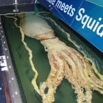Archie Giant Squid