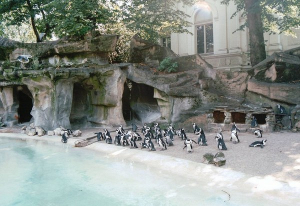 Artis Zoo Penguins