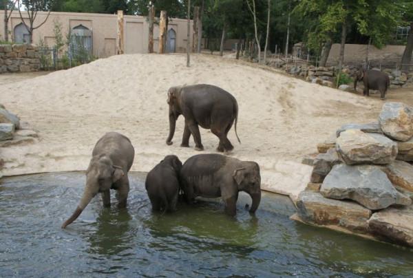 Planckendael Zoo Elephants