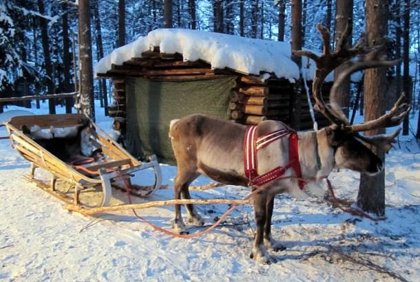 finland-deer
