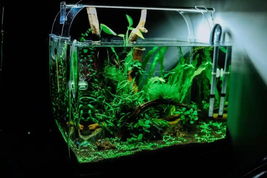 Making sense of shrimp tank water parameters: understanding pH, GH / KH, TSD, etc.