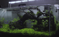 Rasio aquascape