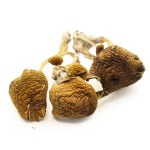 Thai dried shrooms – Buy shrooms online – psychedelics – order dried mushrooms online – Buy Mushroom