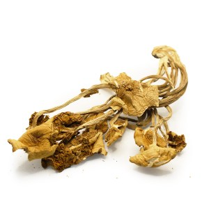 vietnamese cubensis dried shrooms - psychedelics mushroom strain - psychedelics mushroom potency list - Buy shrooms online - psychedelics