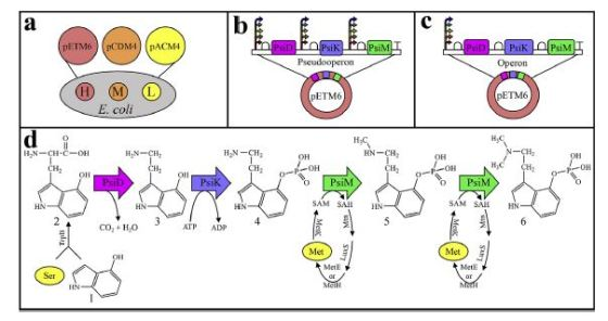psilocybin at scale, Andrew Jones, thinkmyco, mushrooms