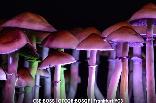 Boss.c, yield growth, one up, obsolem, flourish mushroom labs, absolem