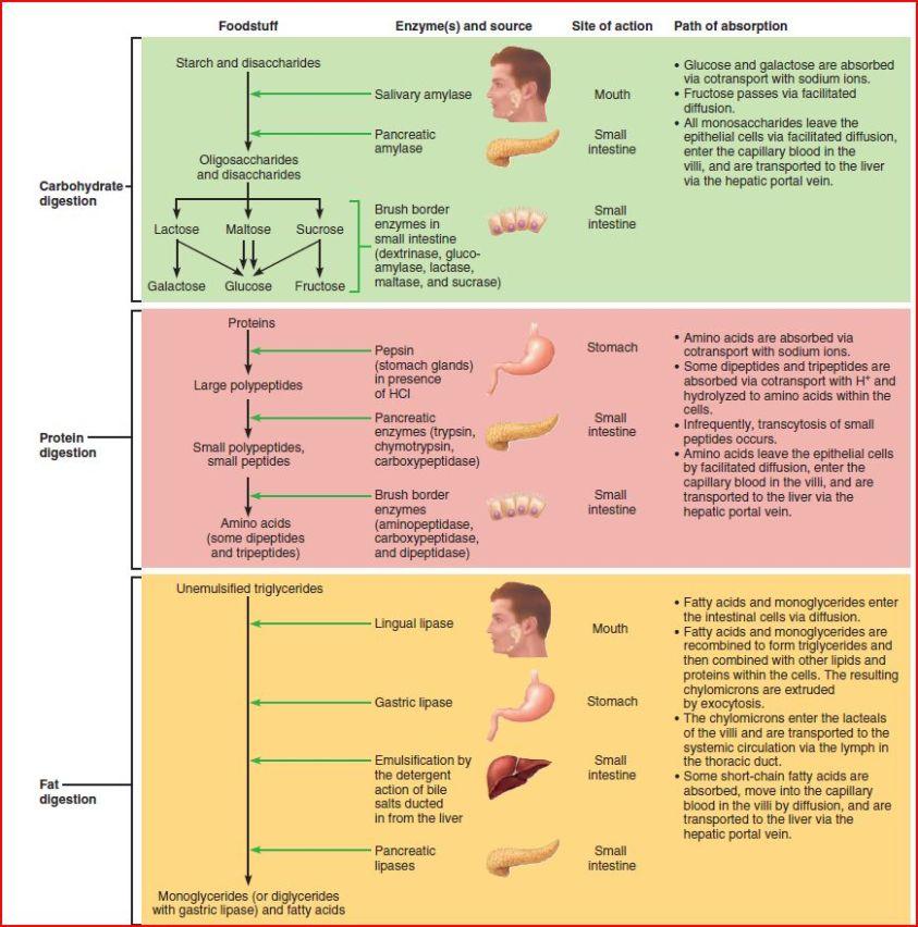Anatomy B Final - Anatomy