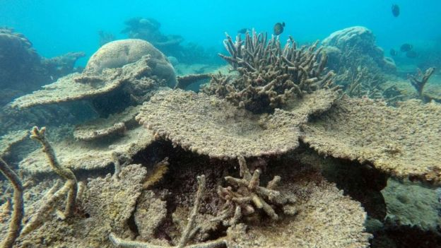 The Death Of The Great Barrier Reef Is Upon Us The Paper Cut