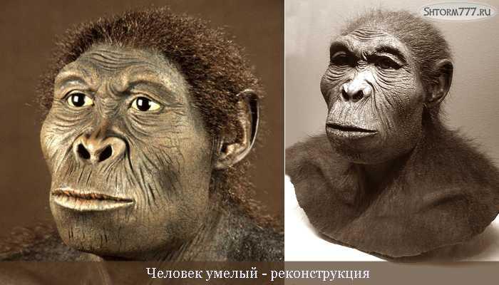 Homo habilis-2