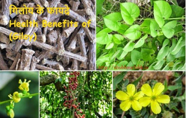 Health Benefits of (Giloy)