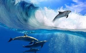 ocean-waves-dolphins-wallpaper