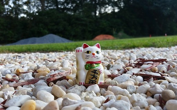 lucky cat in a field of rocks