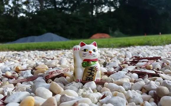 lucky cat in a field of rocks