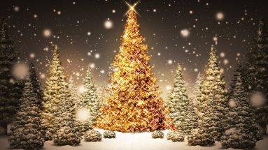 Golden-christmas-tree-photo