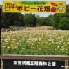 国営武蔵丘陵森林公園で思いっきり遊ぼう!!その②