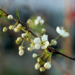 wild flower 2-1