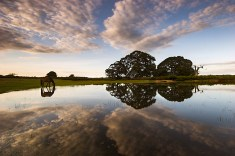 Mogshade Pond Evening
