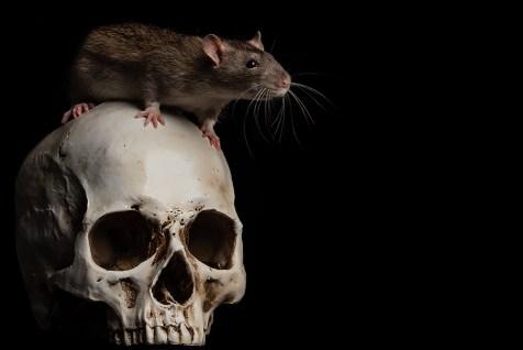Rat-5443