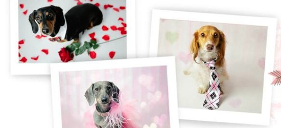 Valentine's Day Pet Photography - Dachshunds - Shutter Hound Pet Photography - shutterhoundphotos.com