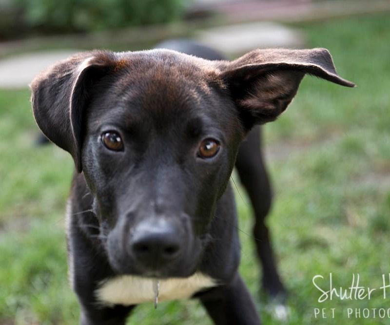 Simon, Astro, + Dexter| Volunteer Photography