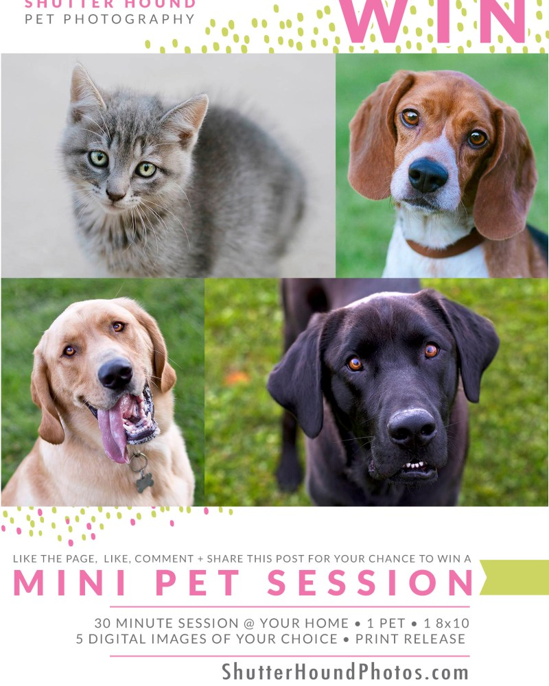 Win a FREE Mini Session for Your Pet!