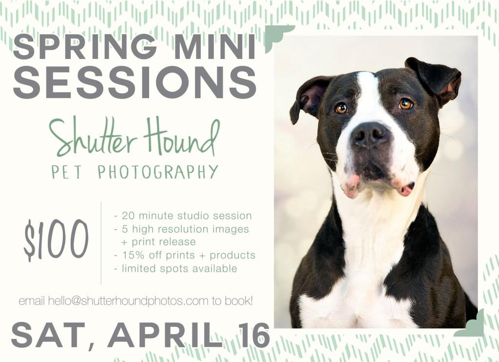 spring2016_mini_sessions