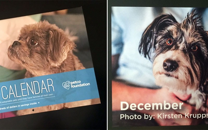 The 2017 Petco Foundation Calendar is Out!