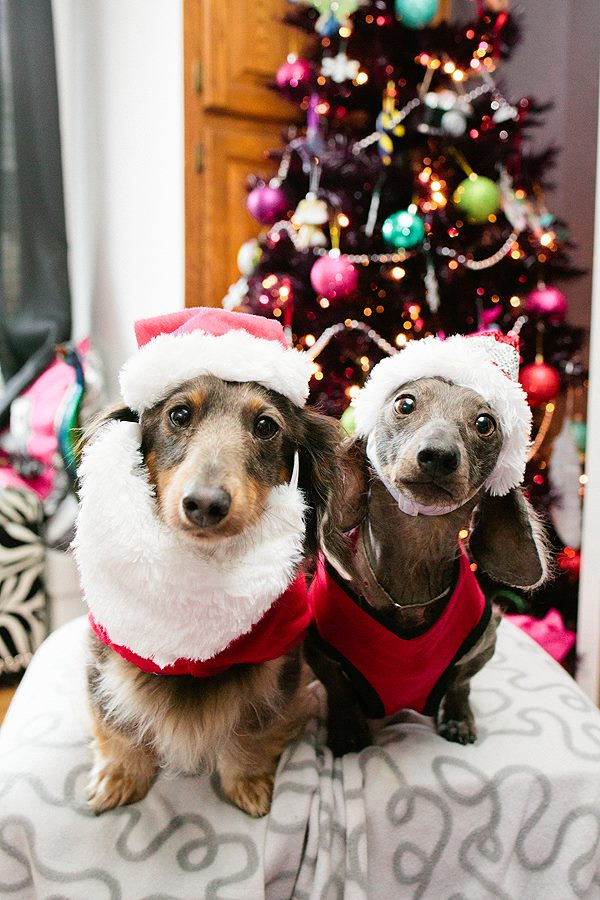 How to Get the Best Photos of Your Pup with Santa