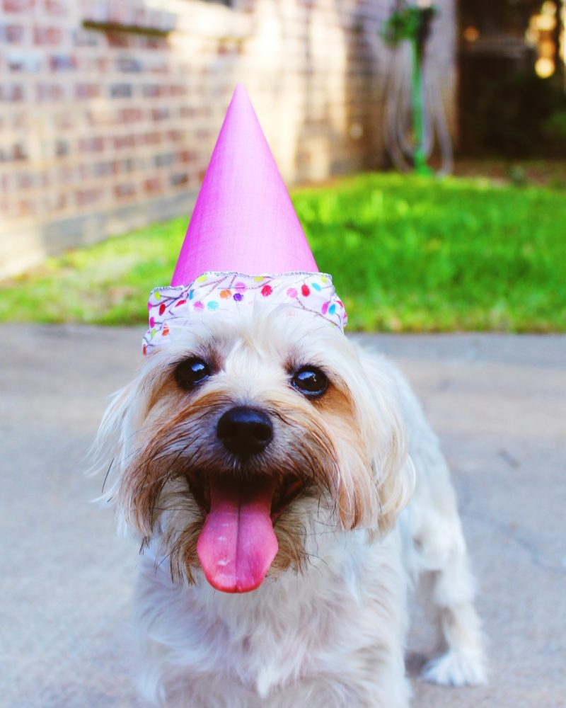 How to Throw Your Dog a Birthday Party
