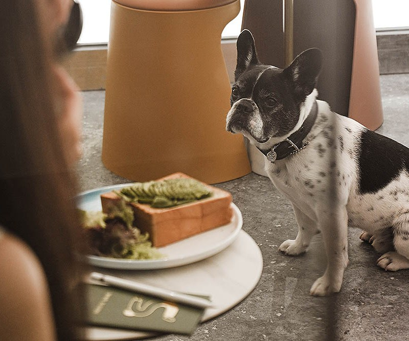 My Favorite Dog-Friendly Places in Austin, TX