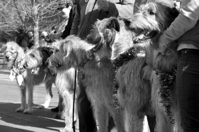 Wolfhound Line-up