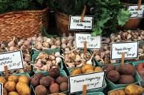 Garlic and Potatoes