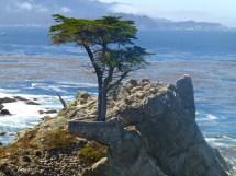 Carmel-sea California Travel Guide - Shutters